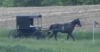 amish buggy ohio