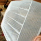 beachy amish