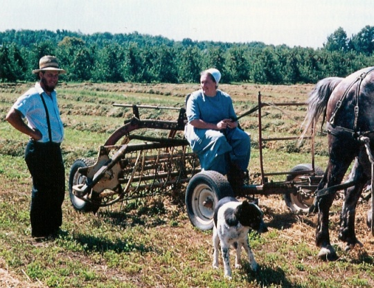 new york amish farmer