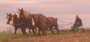 swartzentruber amish farmer