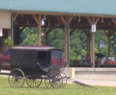 tennessee amish produce auction